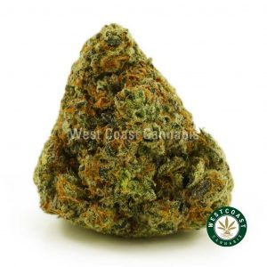 Buy Cannabis Pink Sunset at Wccannabis Online Shop