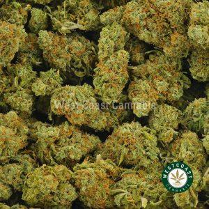 Buy Cannabis Purple Headband at Wccannabis Online Shop