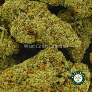 Buy Cannabis Great White Shark at Wccannabis Online Shop