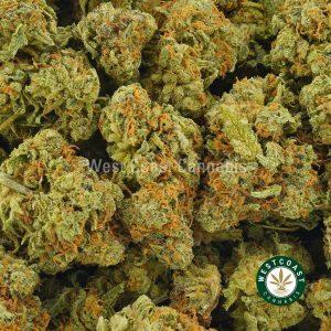 Buy Cannabis Kush Breath at Wccannabis Online Shop