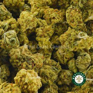 Buy Cannabis Super Silver Haze at Wccannabis Online Shop