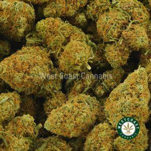 Buy Cannabis Tropicana Cookies at Wccannabis Online Shop