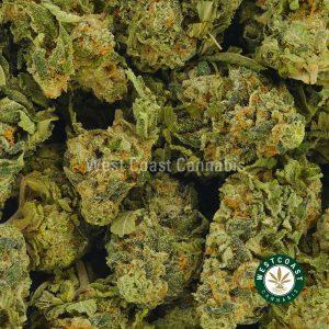 Buy Cannabis Gods Gift at Wccannabis Online Shop