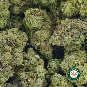 Buy Cannabis Atomic Nothern Lights at Wccannabis Online Shop