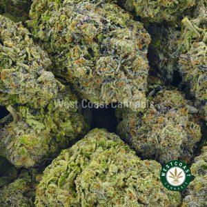Buy Cannabis Mike Tyson at Wccannabis Online Shop