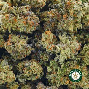 Buy Cannabis Blue Comatose at Wccannabis Online Shop