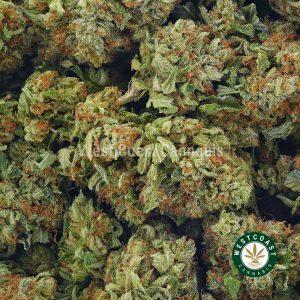 Buy Cannabis Pink Alien Cookies at Wccannabis Online Shop