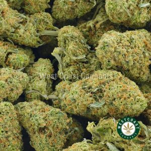 Buy Cannabis London Pound Cake at Wccannabis Online Shop